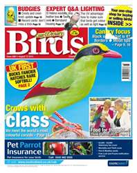 Cage & Aviary Birds issue No. 5867 Crows with class