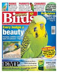Cage & Aviary Birds issue No. 5868 Every budgie a beauty
