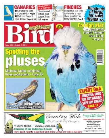 Cage & Aviary Birds issue No. 5869 Spotting the pluses