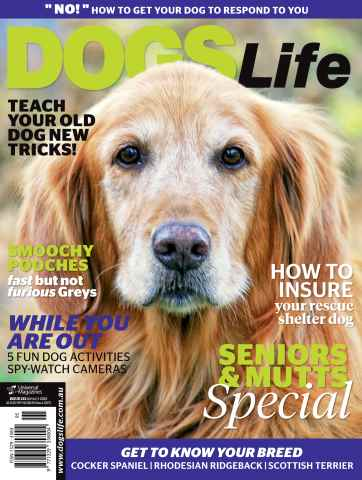 Dogs Life issue Sept/Oct Issue#133