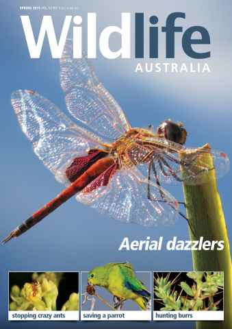 Wildlife Australia issue Wildlife Australia Spring 2015