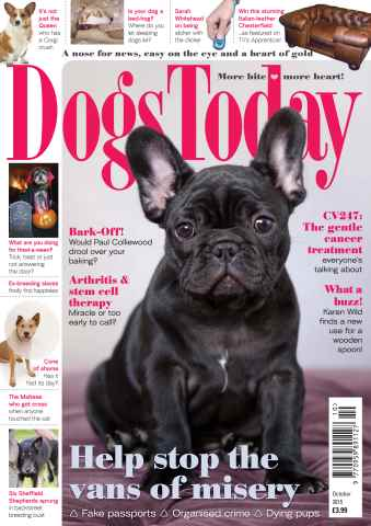 Dogs Today Magazine issue October 2015