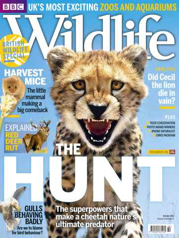 BBC Wildlife Magazine issue October 2015