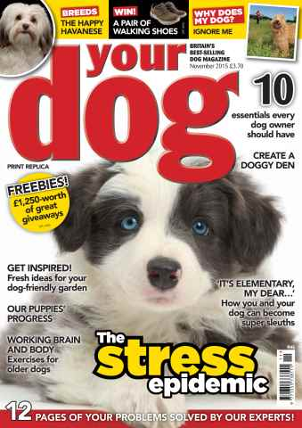 Your Dog issue Your Dog Magazine November 2015