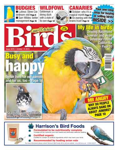 Cage & Aviary Birds issue No. 5876 Busy and happy
