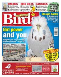 Cage & Aviary Birds issue No. 5877 Girl power and you.