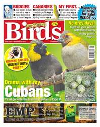 Cage & Aviary Birds issue No. 5879 Drama With My Cubans