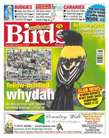 Cage & Aviary Birds issue No. 5880 Yellow-Mantled Whydah