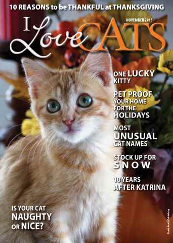 I Love Cats issue Fall 2015