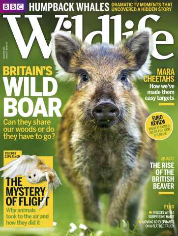 BBC Wildlife Magazine issue December 2015