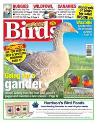Cage & Aviary Birds issue No. 5889 Going for a gander