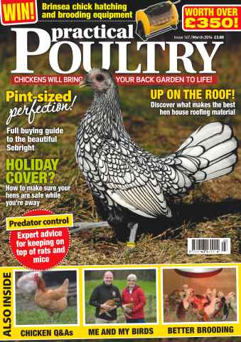 Practical Poultry issue No. 147 Pint-sized perfection