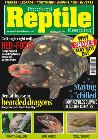 Practical Reptile Keeping issue No. 85 Getting it right with Red-Foots
