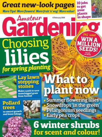 Amateur Gardening issue 6th February 2016