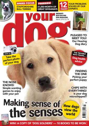 Your Dog issue Your Dog Magazine March 2016