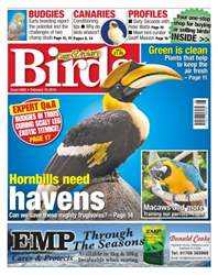 Cage & Aviary Birds issue No. 5892 Hornbills need havens