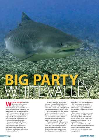 DIVER Preview 40