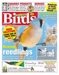 Cage & Aviary Birds issue No. 5893 Rearing Reedlings