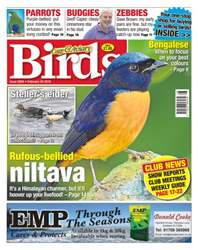 Cage & Aviary Birds issue No. 5894 Rufous-bellied niltava