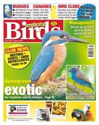 Cage & Aviary Birds issue No. 5895 Homegrown Exotic