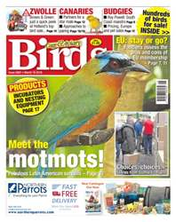 Cage & Aviary Birds issue No. 5897 Meet The Motmots!