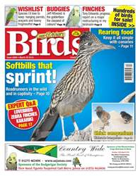 Cage & Aviary Birds issue No. 5899 Softbills that sprint!
