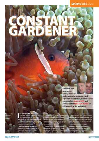 DIVER Preview 41