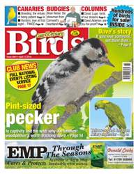 Cage & Aviary Birds issue No. 5901Pint-sized pecker
