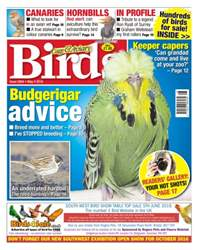 Cage & Aviary Birds issue No. 5904 Budgerigar Advice