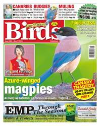 Cage & Aviary Birds issue No. 5905 Azure-Winged Magpies