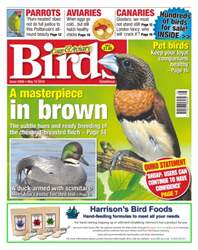 Cage & Aviary Birds issue No. 5906 A Masterpiece In Brown