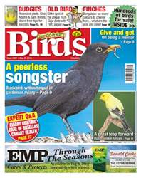 Cage & Aviary Birds issue No 5907- A Peerless Songster