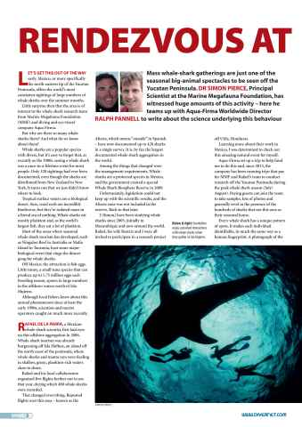 DIVER Preview 2
