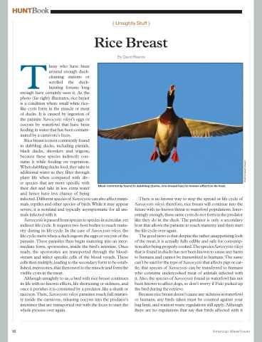 American Waterfowler Preview 18