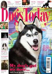 Dogs Today Magazine issue August 2016