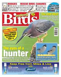 Cage & Aviary Birds issue No. 5914 The Eyes Of A Hunter