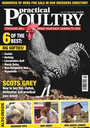 Practical Poultry issue No. 153 - Scots Grey