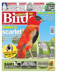 Cage & Aviary Birds issue No. 5917 Studies In Scarlet