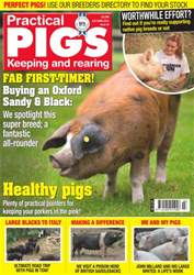 Practical Pigs issue No. 24 Fab First-Timer