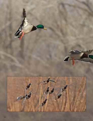 American Waterfowler Preview 64