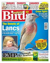 Cage & Aviary Birds issue No. 5918 The Linnets Of Lancs
