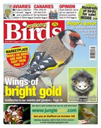 Cage & Aviary Birds issue No. 5919 Wings Of Bright Gold