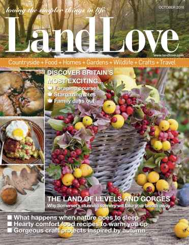 LandLove Magazine Preview 1