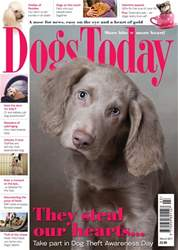 Dogs Today Magazine issue March 2017