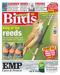 Cage & Aviary Birds issue No. 5945 King Of The Reeds