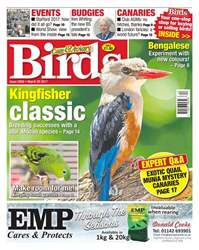 No. 5950 Kingfisher Classic  issue No. 5950 Kingfisher Classic