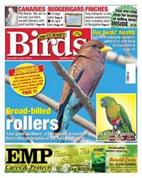Cage & Aviary Birds issue No. 5954 Broad-billed rollers
