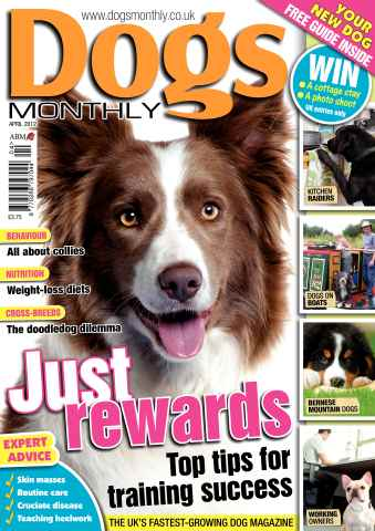 Dogs Monthly issue April 2012