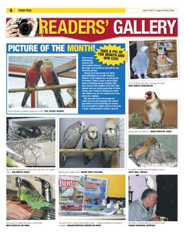 Cage & Aviary Birds Preview 6