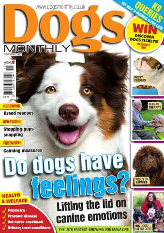 Dogs Monthly issue November 2012